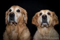 Chester und Fina