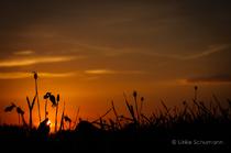 Sonnenaufgangssilhouette