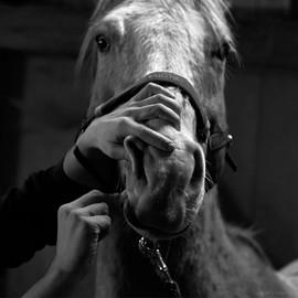 ProRoss Pferdezahnärztin